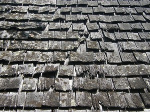 Need a New Roof or a Roof Repair